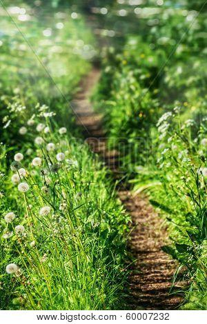 Beautiful Curvy Path