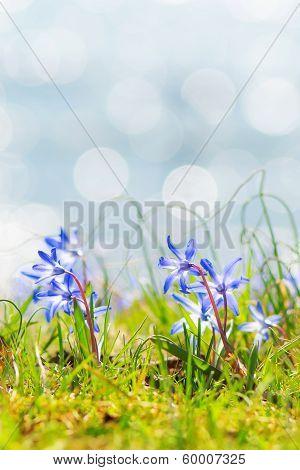 Blue Spring Flowers Near Water