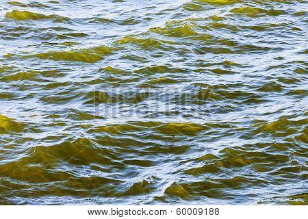 Detail Of Fresh Brackish Green Water