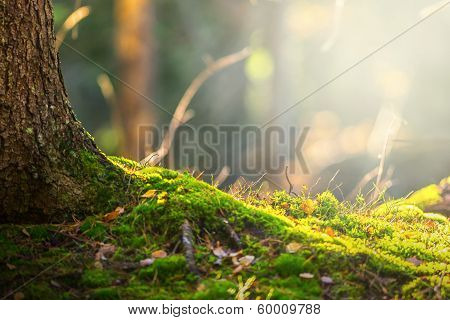 Forest Floor In Autumn With Ray Of Light