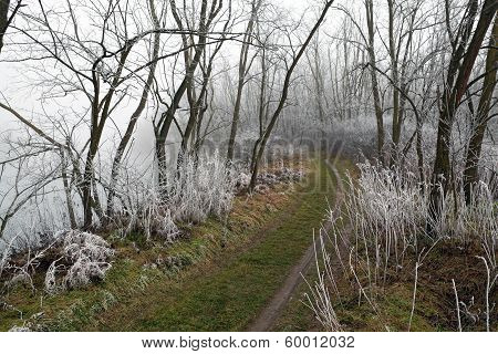 Footpath Through Frosty Woods