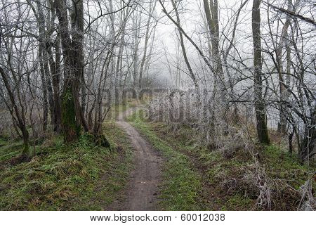 Footpath Through Frosty Trees
