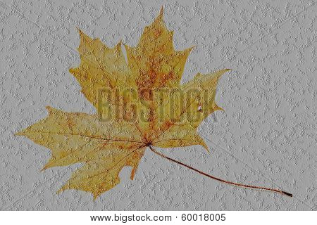 Transparent Maple Leaf On A Concrete Surface