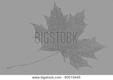 Artificial Clean Maple Leaf On A Gray Background