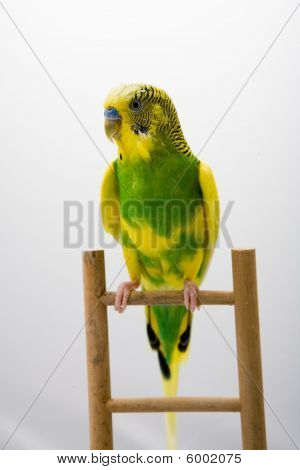 Colored Parrot Sitting At The Branch