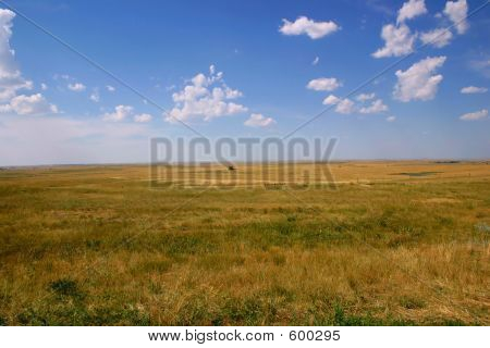 Midwest  Grain Field