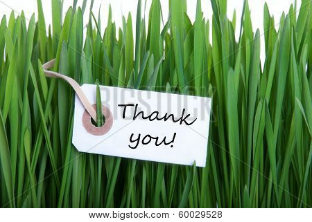 Gras Background With Thank You