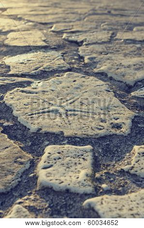 Starfish Fossil In A Paving Stone