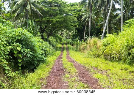 A red dirt road in the mountains of Fiji show the rich, vibrant green plant growth in of a wet, rainforest environment.
