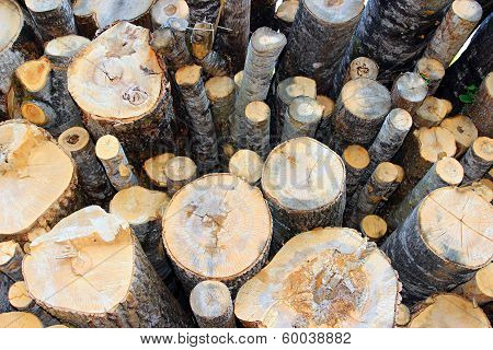 Sawn Birch Logs At The Sawmill