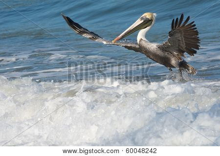 Fun with Pelicans - Incoming