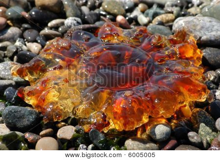 Amber Colored Jellyfish
