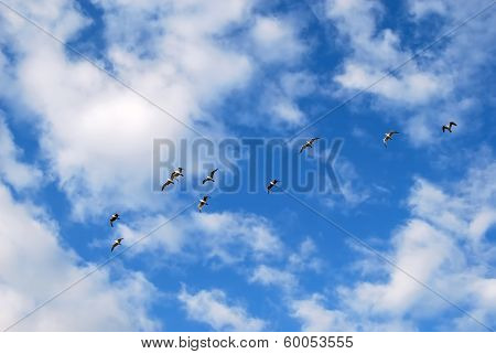 Flying Seagull On Blue Sky With Clouds