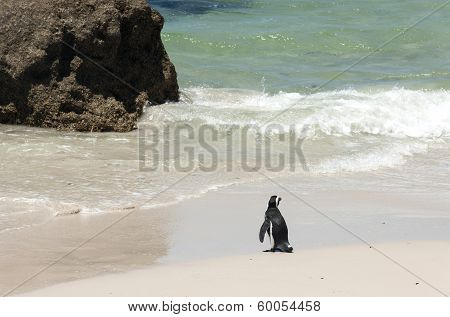 Single Penguin On The Beach