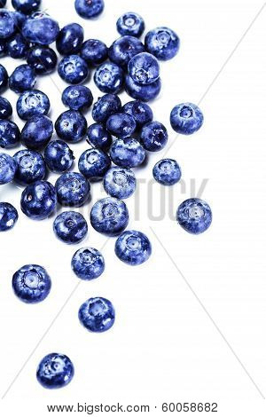 Fresh Blueberries Isolated On White Background Close Up. Group Of Large  Blue Berries Macro.