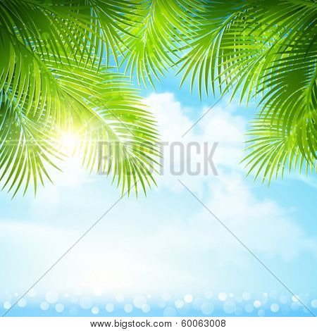 Palm leaves with bright sunlight
