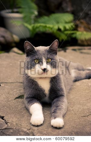 ashy gray cat lying on the street summer