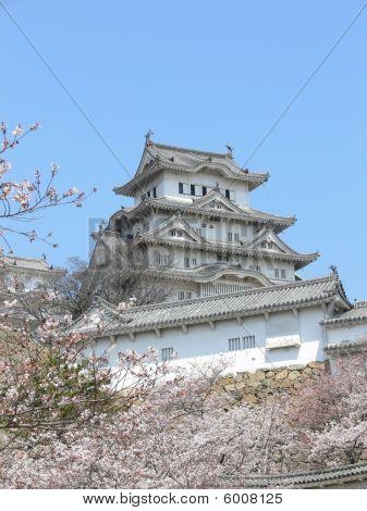 Himeji With Sakura
