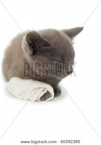Cute grey kitten sleeping with a bandage on its paw on white background