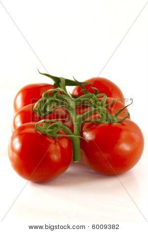 Tomatoe on the vine
