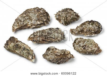 Whole Pacific oysters on white background