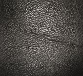 pic of crocodilian  - Background of Dark Gray and Black leather texture - JPG
