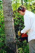 pic of man chainsaw  - Man cutting down a tree with a chainsaw - JPG