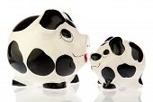 stock photo of cash cow  - Two money saving pigs mother and baby in black and white cow print looking towards each other - JPG