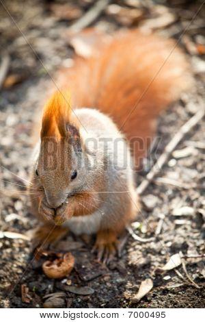 Squirrel In Autumn Park
