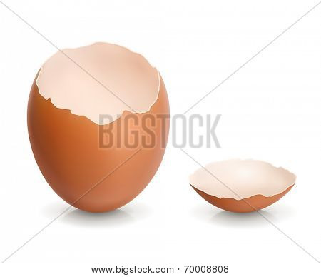 Eggshell, vector illustration
