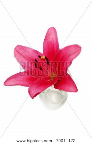 Burgandy Summer Lily In A Glass Vase Over White
