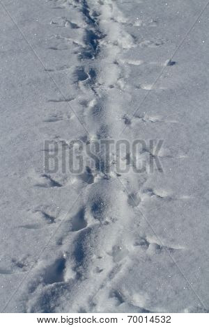 Footprints In The Snow Adelie Penguin Who Crawled On His Belly Winter Day