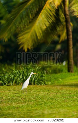 Bird On Goa