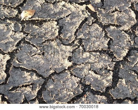 Cracked soil crust