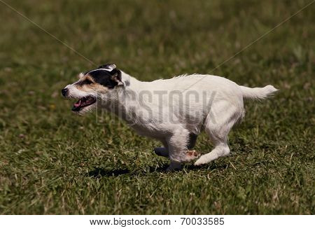 Speedy Dog