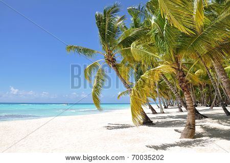 Palm Trees And Tropical Beach