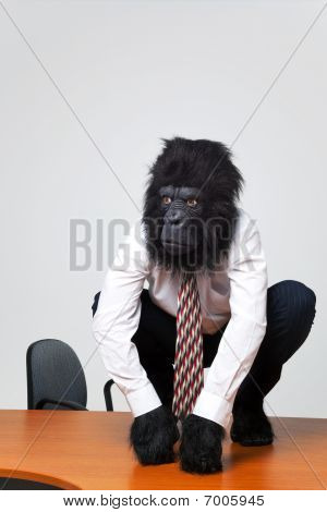 Gorilla Businessman In Shirt And Tie Sat On A Desk