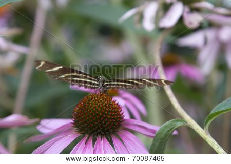 Butterfly Feeding On Flower, Head On