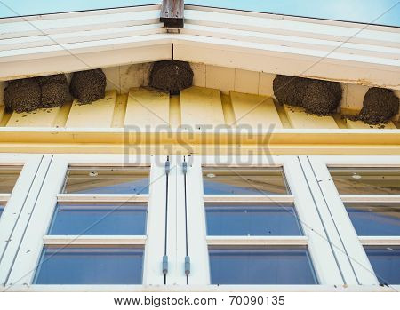 Delichon Urbica Birds Nesting Under The Eaves Over Blue Windows Under Blue Sky At Summer