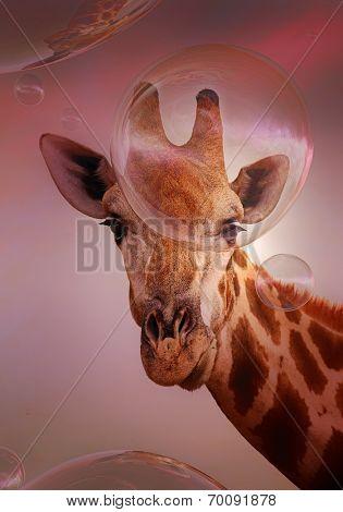Giraffe looking at floating soap bubbles - digital artwork