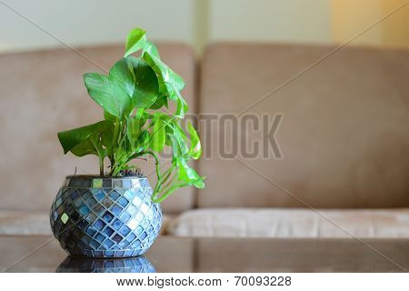Vase With Green Leaves