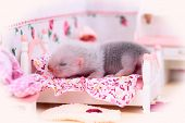 stock photo of ferrets  - Female ferret baby in the doll house sleeps on a little bed - JPG