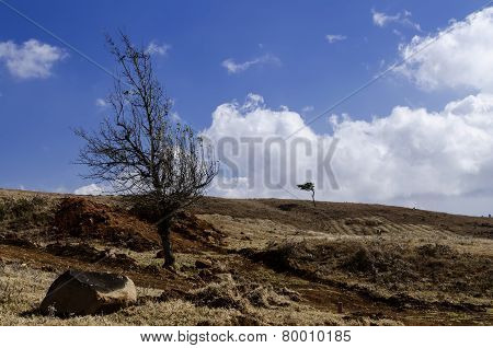 arid barren field