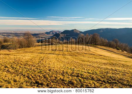 Golden Pasture In The Alps