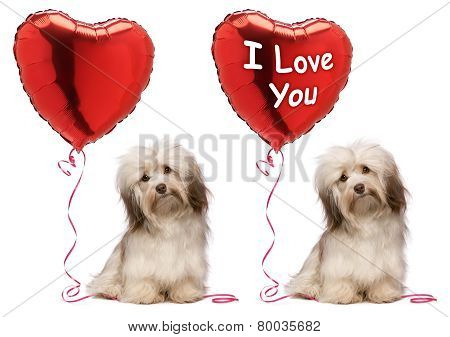 I Love You Valentine Havanese Dog Set
