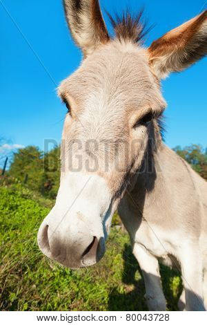 close up of the muzzle of a donkey, outdoors