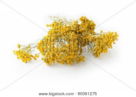 Dried Tansy Twig