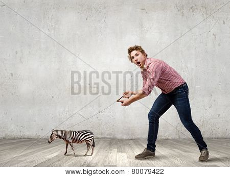 Young man in casual holding small zebra on lead