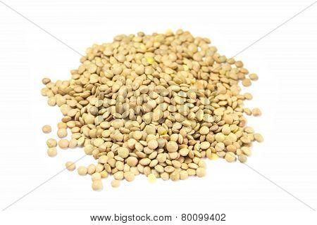 grain lentil