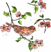 foto of nightingale  - bird at branch with flowers and leaves drawing by ink and watercolor - JPG